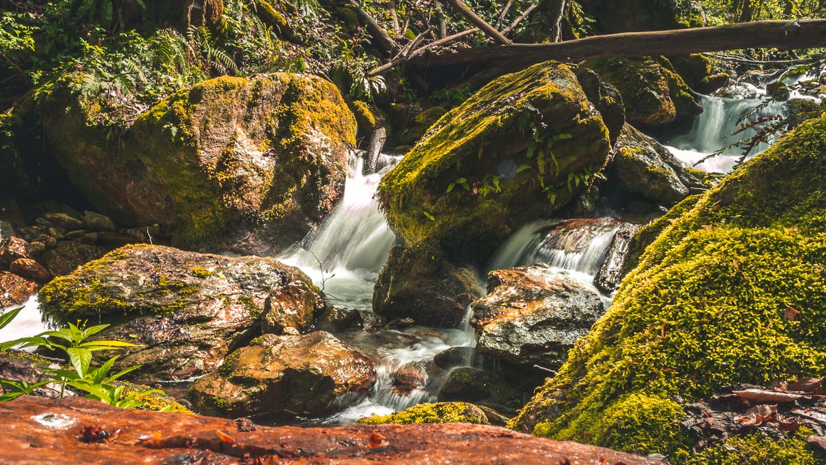 Mountain stream flowing in the forest.