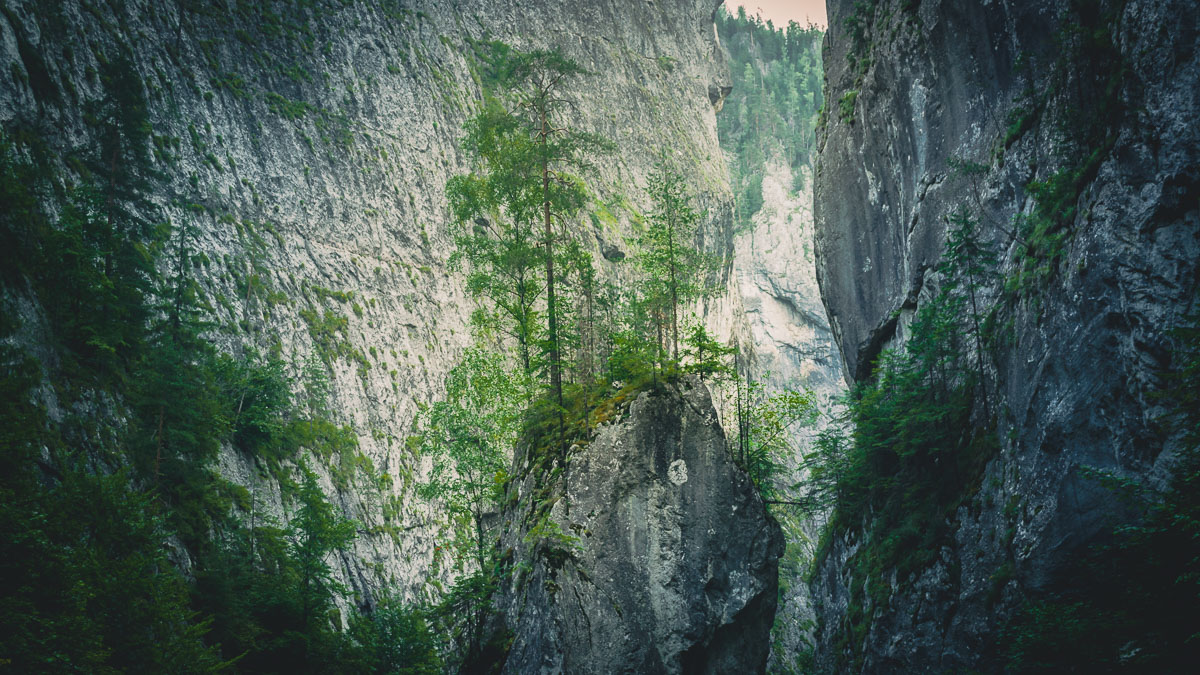 Trees growing on a smaller cliff In the Bicaz gorge.